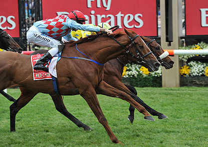 2013 Melbourne Cup: The guide to finding a winner, and beating the myths