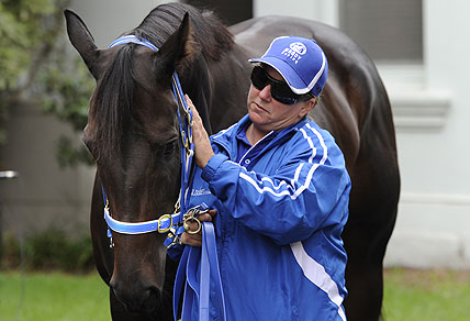 Strapper Donna Fisher handles Black Caviar after trainer Peter Moody (right) announced the horse's retirement in Melbourne, Wednesday, April 17, 2013. Champion racehorse Black Caviar has run her last race, ending her career with 25 wins from as many starts. (AAP Image/Julian Smith)