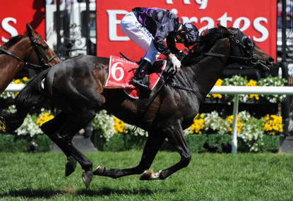 2014 Melbourne Cup: Preview and top tips