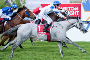2013 Kingston Town Classic: Horse racing preview, live blog and tips