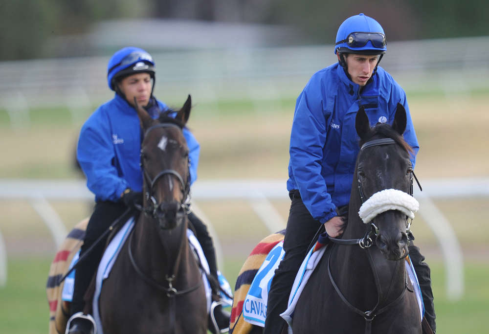 2014 Melbuorne Cup hopeful Cavalryman