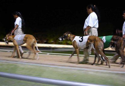 Greyhound decision a personal slur