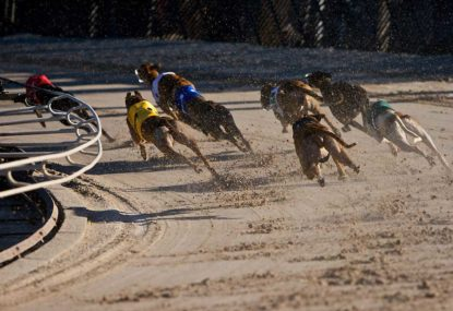Where to now for greyhound racing?