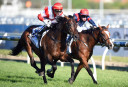 2015 Melbourne Cup: Preview and top tips
