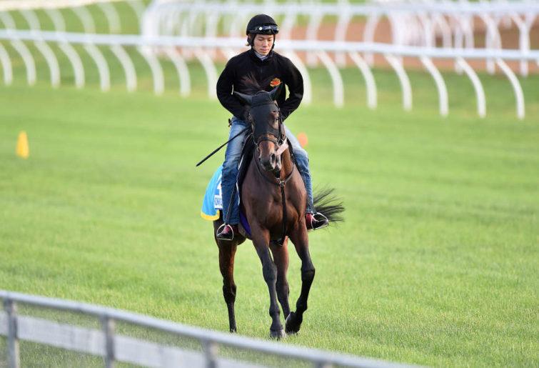 Japanese horse Hokko Brave