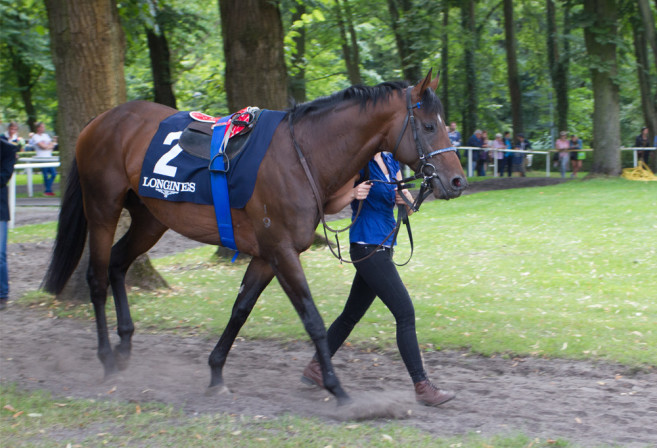 Protectionist in Germany, ready to race (Image: Tristan Rayner)