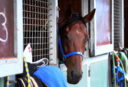 Behind the Barriers: Five bets for Grafton, May 28