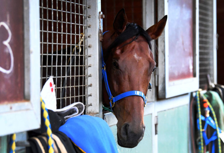 Horse Racing generic