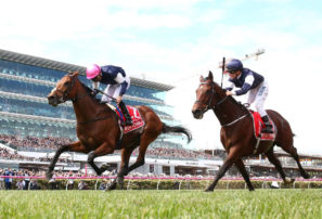 Cup runneth under: How to improve Aussie horses' chances