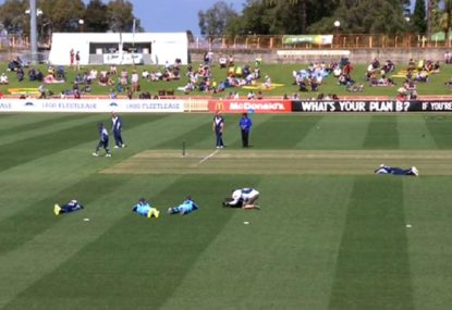 Bee-zare scenes as innings delayed due to bee invasion