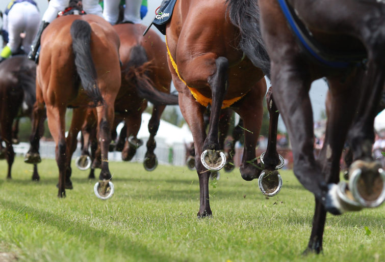 Sydney racing selections: Randwick tips for Saturday, February 27
