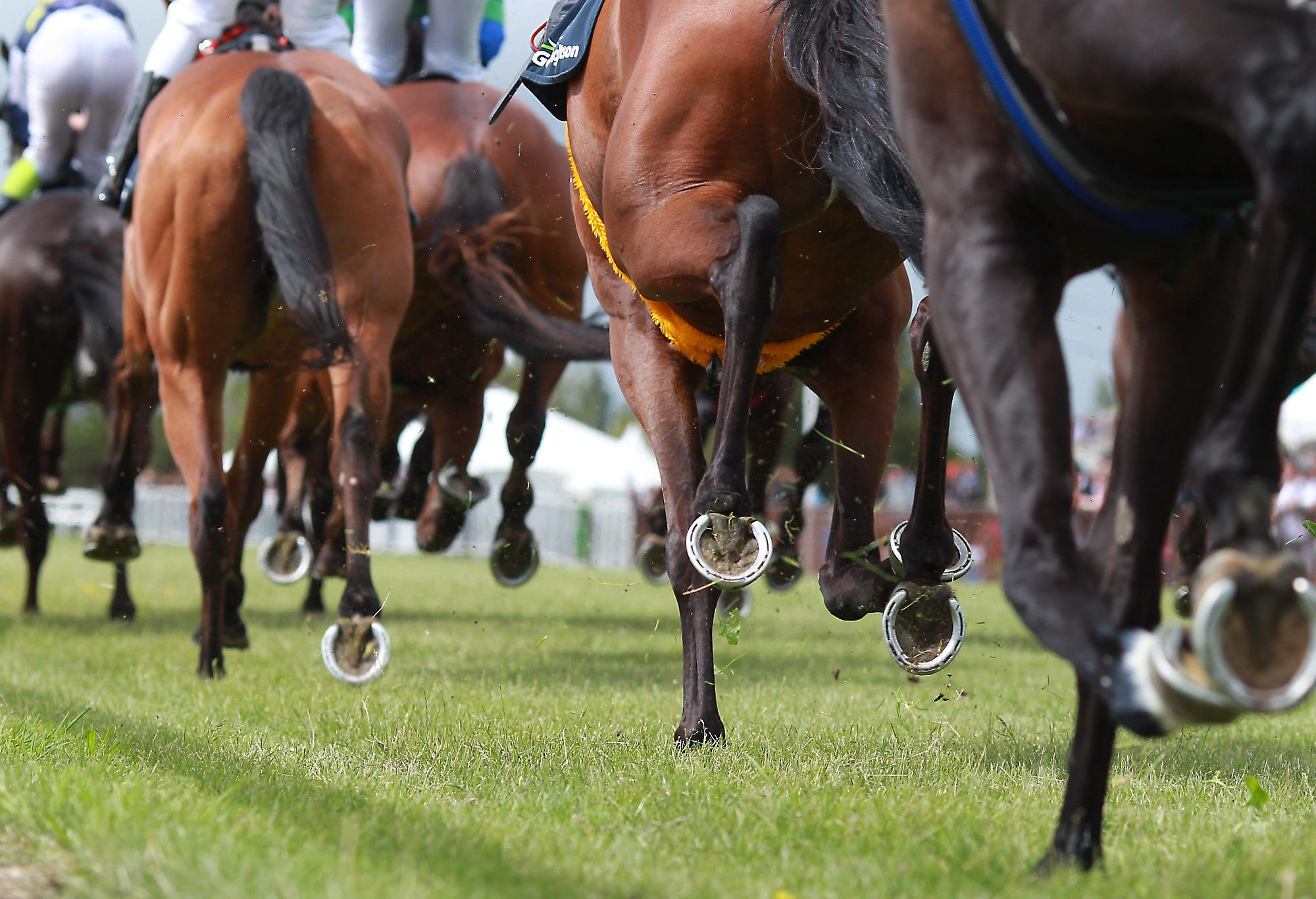 Horse racing generic 1