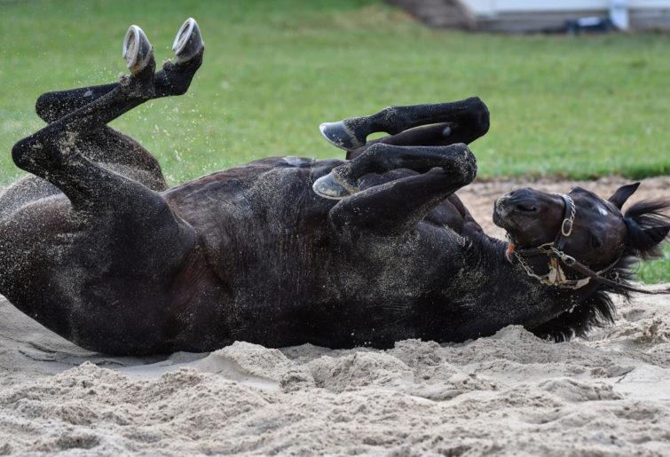 Cliffsofmoher sees a roll in the sand after a Werribee trackwork meeting.
