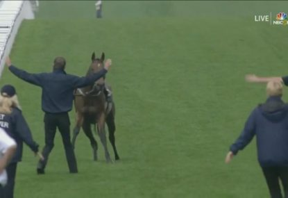 Loose horse gives handlers a chase as it runs amok at Royal Ascot