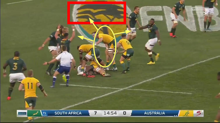 wallabies breakdown analysis