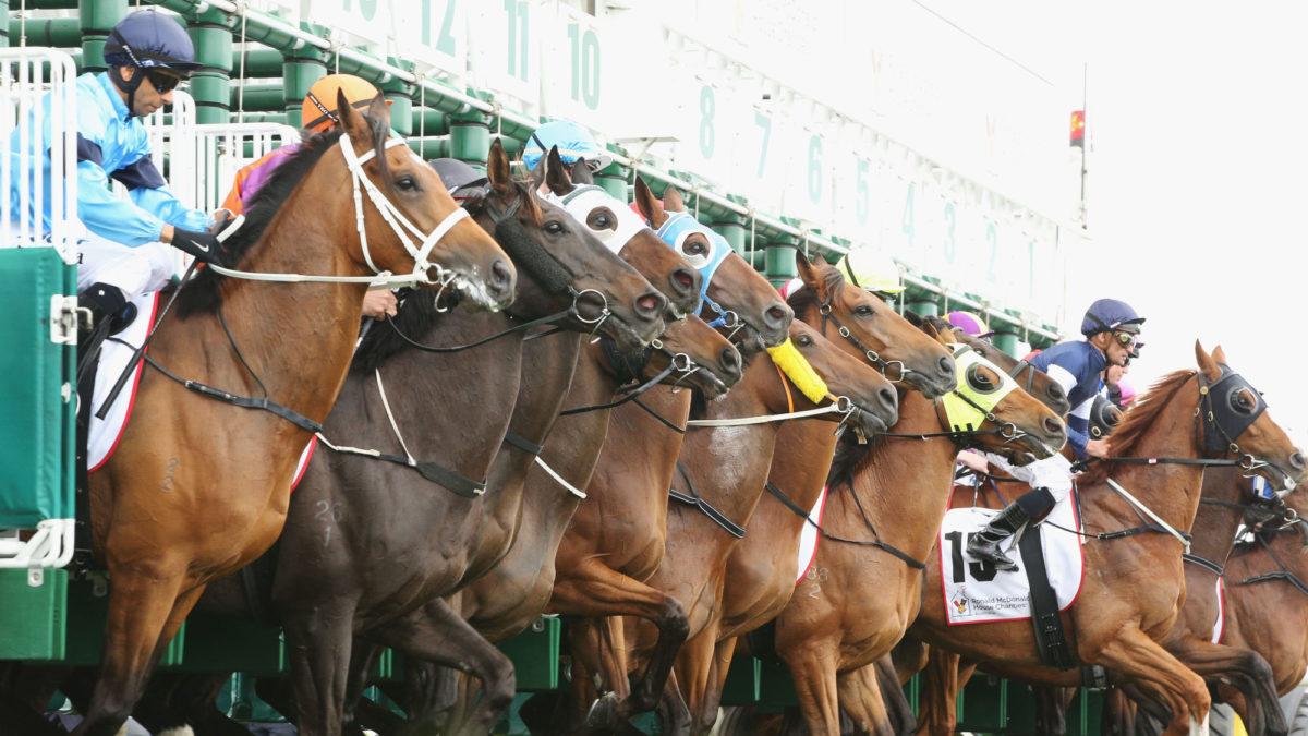 Harness racing selections: Addington Saturday