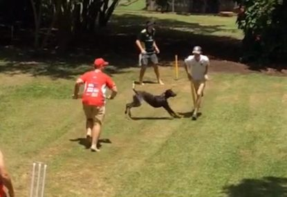 Backyard batsman gets hilariously poleaxed by the family dog