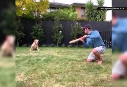 Apparently even Kane Williamson's dog is good at cricket