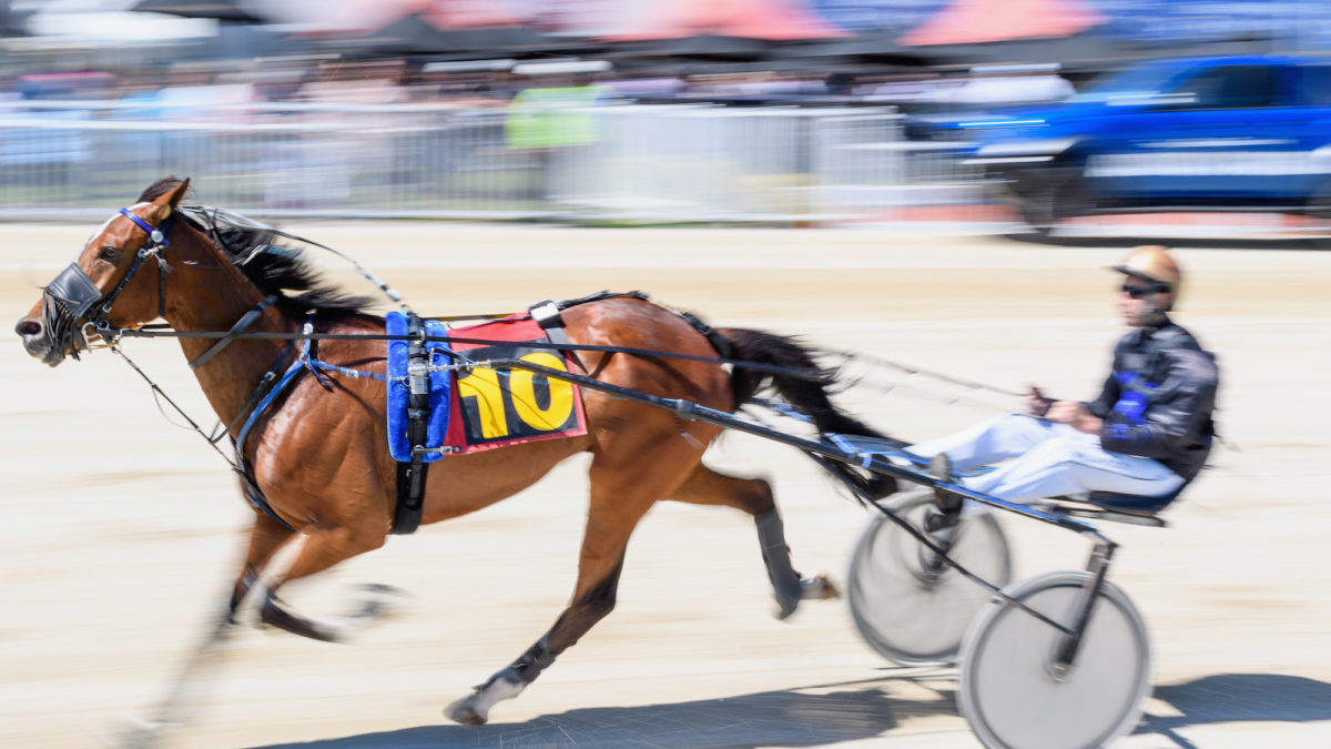Harness racing selections: Albion Park Tuesday