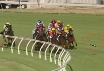Swooping magpie smashes into jockey, fails to stop race win