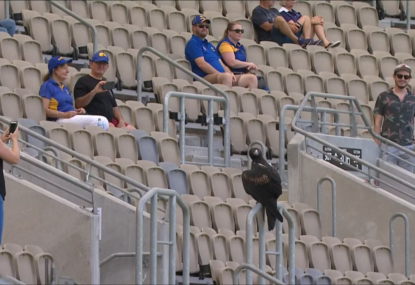 Eagles mascot goes AWOL pre-game, terrorises fans, delays start