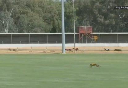 Greyhound takes the in-field shortcut to catch up to the field