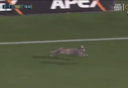 A stray cat somehow manages to get itself onto an A-League pitch