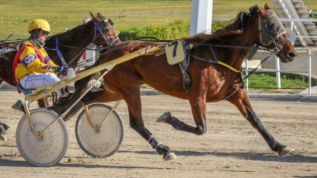 Harness racing selections: Saturday, September 11