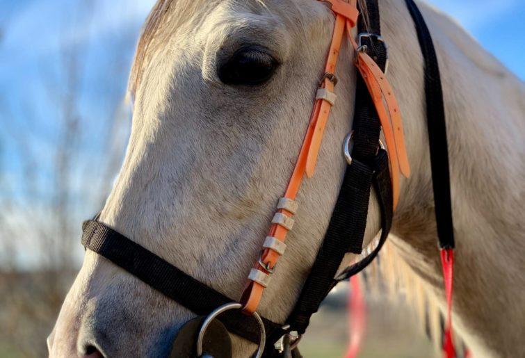 A close up of a grey horse