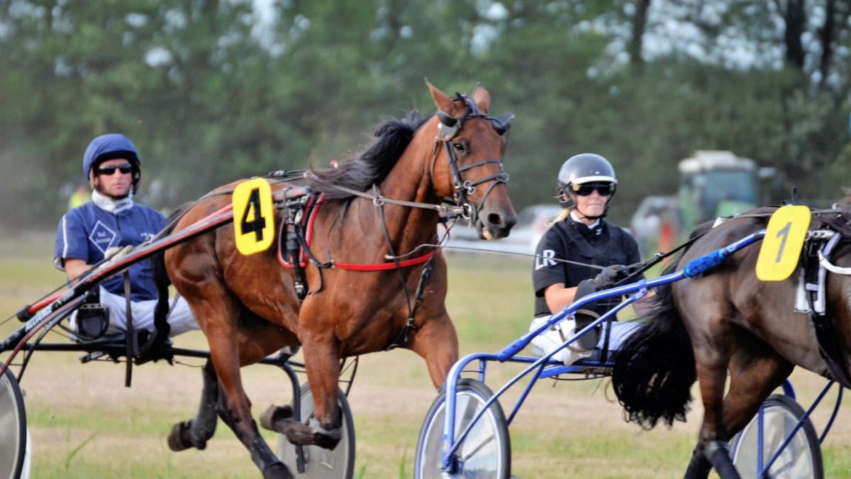 Harness racing selections: Thursday, September 16