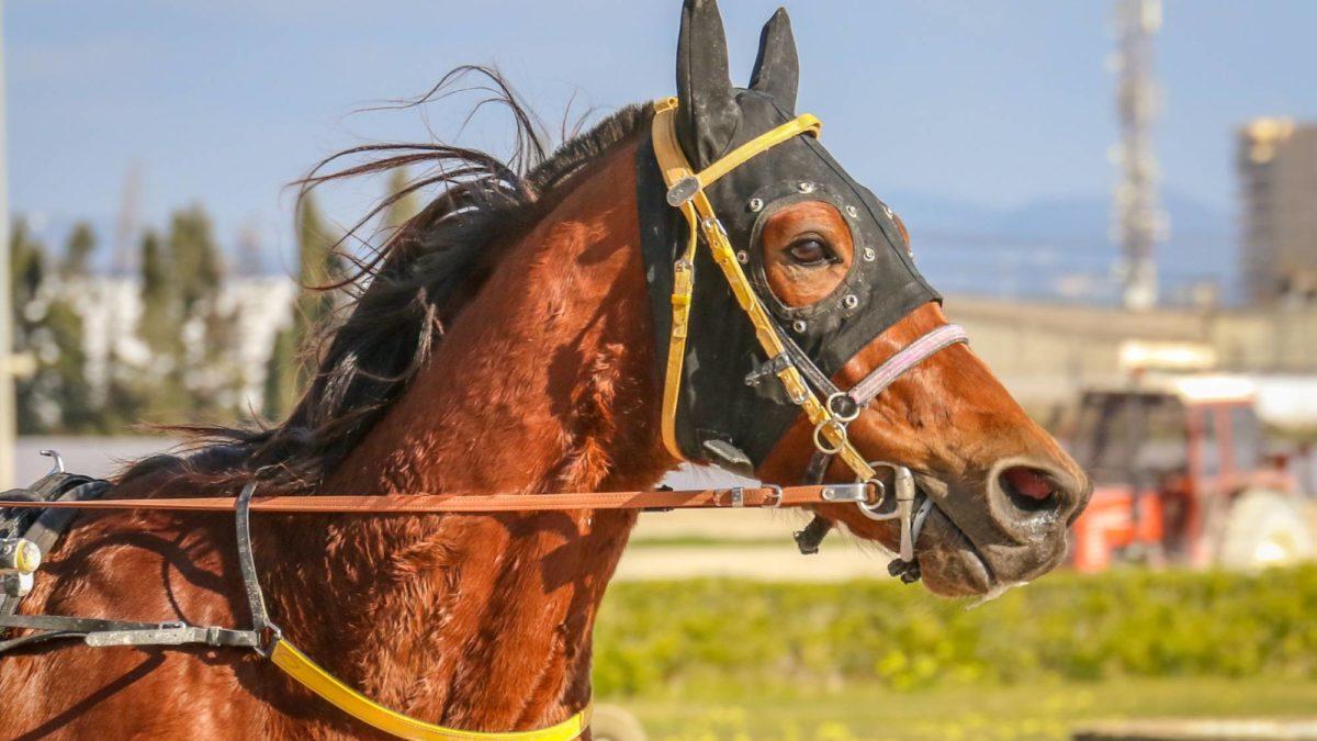Harness racing selections: Sunday, September 12