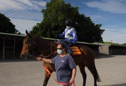Behind the scenes look at preparing a racehorse for The Everest