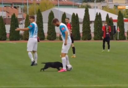 Bosnian football league goes viral after dog invades pitch, nutmegs player